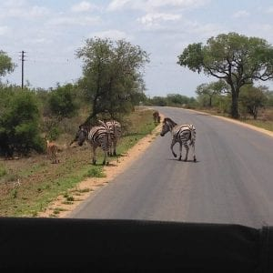 Kruger National Park, South Africa - on safari