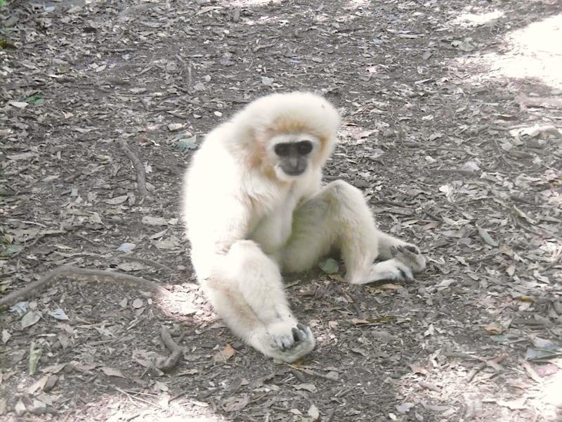 Monkeyland & Birds of Eden - Garden Route, South Africa