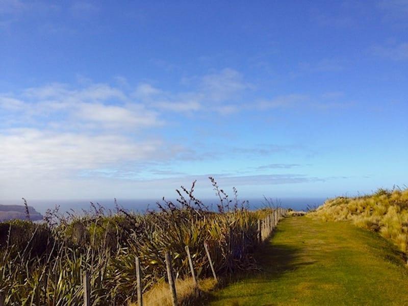 Road Trip around stunning Otago Peninsula near Dunedin, South Island, New Zealand - SassyZenGirl.com/New-Zealand