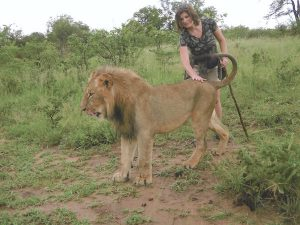 walk with lions zimbabwe