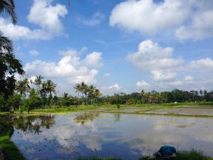 a walk in the rice fields around ubud