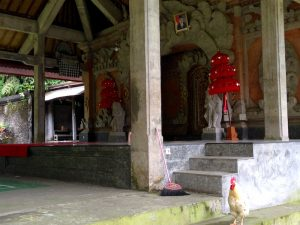rooster in temple