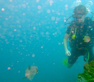 Gundi diving in Amed