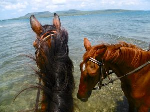 horseback riding in the West Bali natl Park