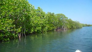 kayaking through the mangroves Bali
