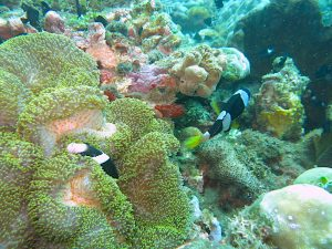 beautiful coral reef near Amed Bali