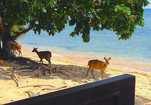 The Menjangan Luxury Beach Hotel Bali National Park