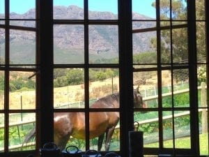farm sit for digital nomads in Cape Town